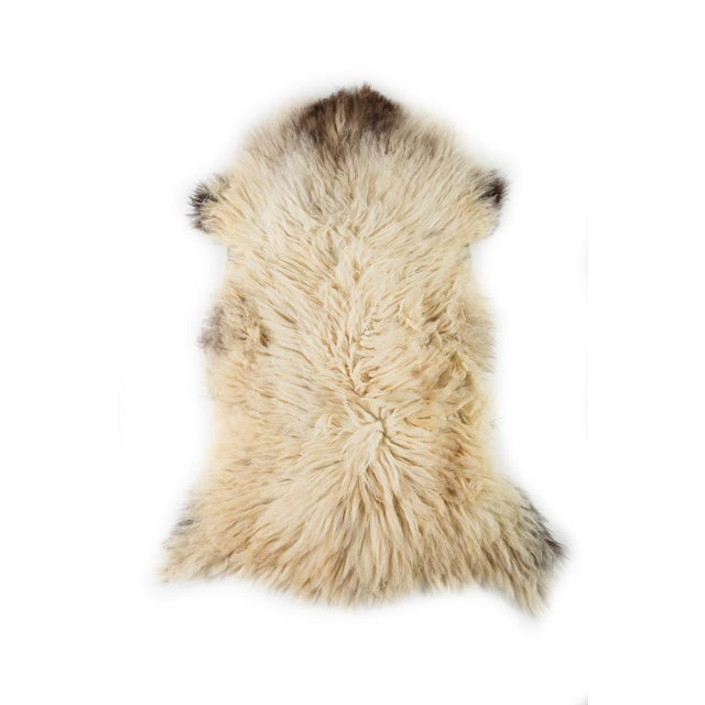 """Contemporary Hand-Tanned Sheepskin Pelt - 2'2""""x3'6"""" For Sale In Chicago - Image 6 of 6"""