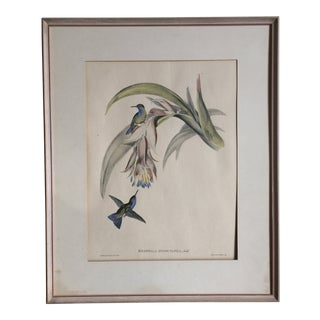 """Hummingbirds"" Lithograph Print by John Gould (1804-1881) For Sale"