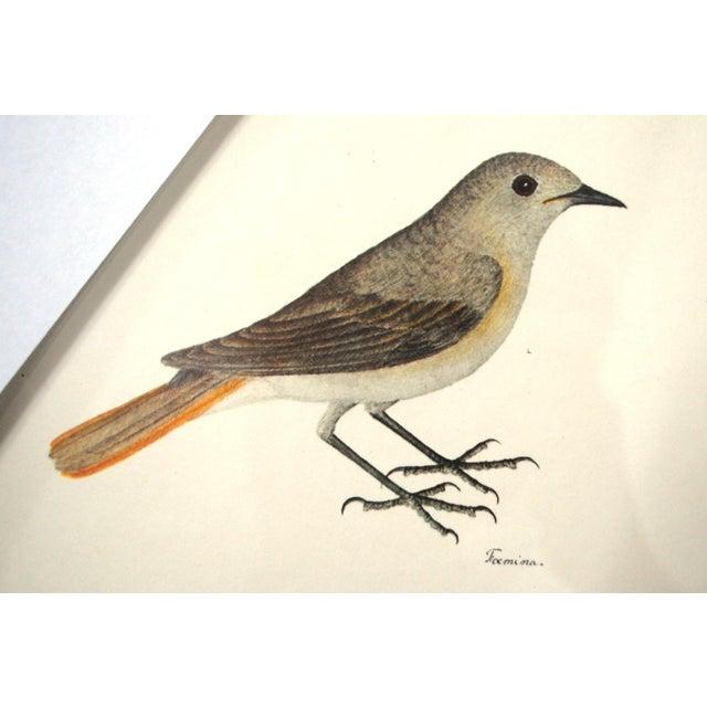 Vintage Framed Bird Prints - Set of 3 - Image 8 of 10