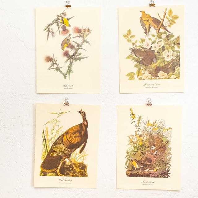 1960s Audubon Bird Prints | 17 Pc Gallery Collection For Sale - Image 10 of 13