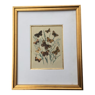 Framed Species of Butterflies Lithograph C-1879 For Sale