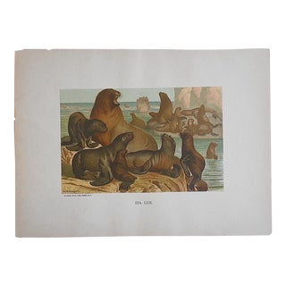 Antique Animal Lithograph For Sale