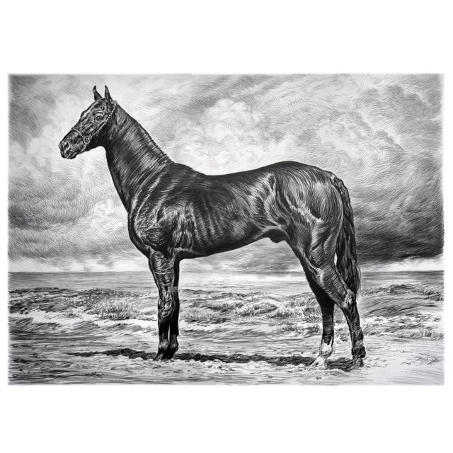 """Contemporary Contemporary """"Black Akhal Teke I"""" Rick Shaefer Charcoal Print For Sale - Image 3 of 3"""