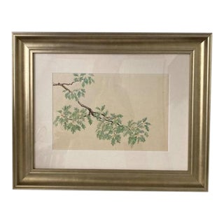 Mid 20th Century Botanical Watercolor Study of a Branch, Framed For Sale