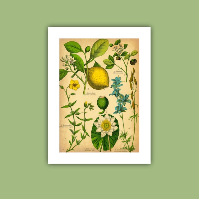 Floral Bookplate Archival Print - Image 3 of 4