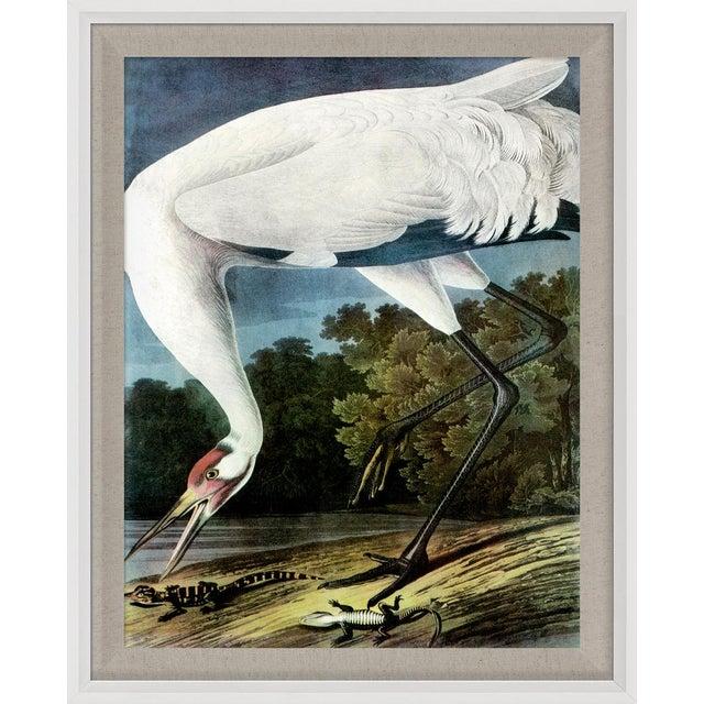 Audubon 11, Framed Artwork For Sale