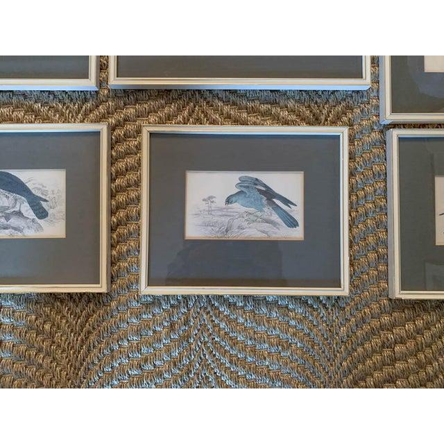 Set of 6 1840's Bird Engravings - Framed For Sale - Image 11 of 11