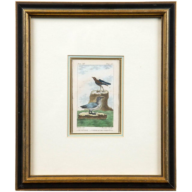 Late 18th Century Antique French Engraving of Birds, Paris, Late 18th Century For Sale - Image 5 of 5