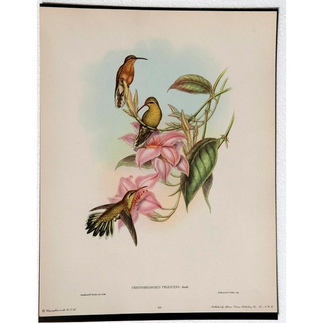 1940s John Gould Hummingbird Lithographs - Set of 6 (Marked Down to $35 Until September 15th) - Image 4 of 11