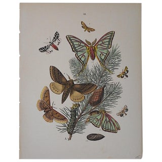 Antique Butterflies/Moths Chromolithograph