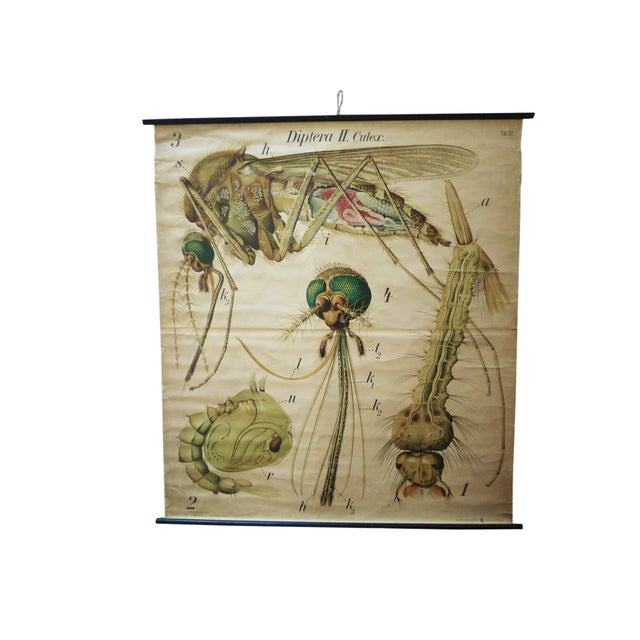 Vintage Scientific Chart - Zoological Wall Plate - Image 1 of 4
