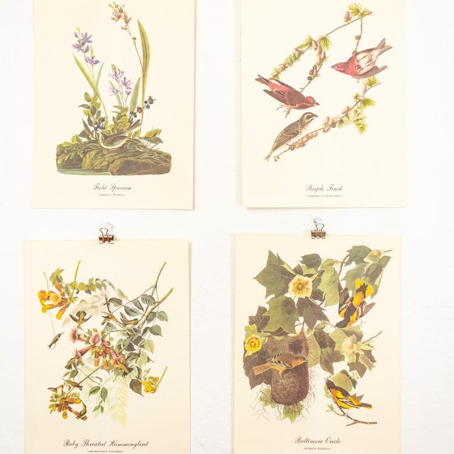 1960s 1960s Audubon Bird Prints | 17 Pc Gallery Collection For Sale - Image 5 of 13