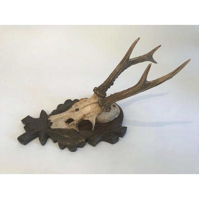 Black Forest Antlers Trophy With Leaf and Branch Decoration on Mount For Sale In Nashville - Image 6 of 13