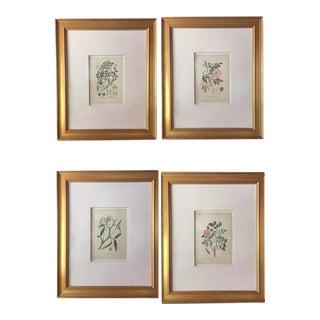 Original Botanical Illustrations c.1900 - Set of 4 For Sale