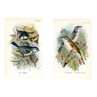Blue Titmouse and Whitethroat, 1896, Pair of Original Bird Lithographs For Sale
