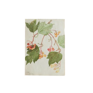 Antique Botanical Watercolor Painting For Sale