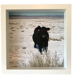 Cattle Call Limited Edition Photograph For Sale