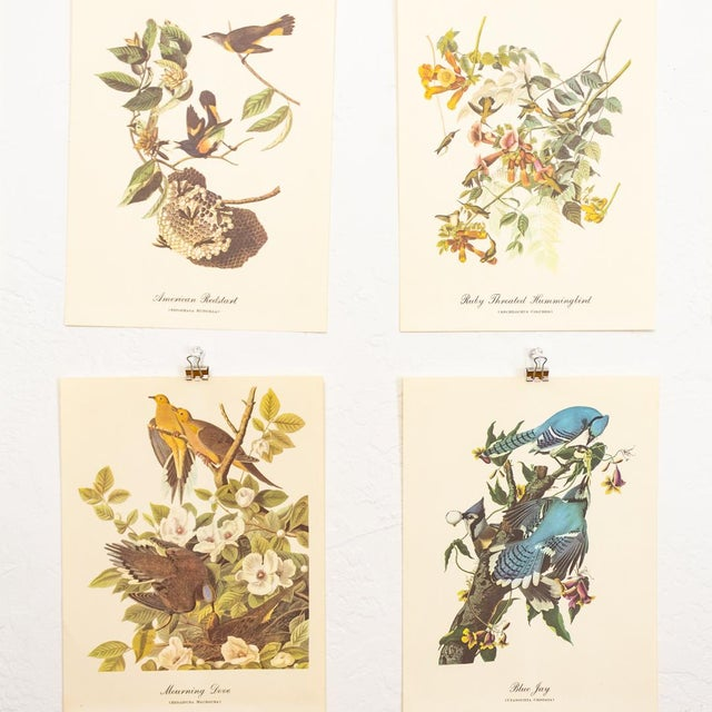 American Classical 1960s Audubon Bird Prints | 17 Pc Gallery Collection For Sale - Image 3 of 13