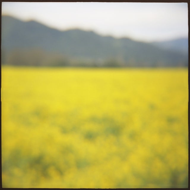 """Mustard,"" film toy camera image from the series ""Remembered Landscapes."" Napa, Ca. 10x10 image printed on 11x14 archival..."