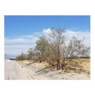 Americana Photograph of Vanishing Desert Road With Tree in Foreground