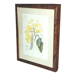 1920s Antique Dutch Colonial Indonesian Botanical Painting For Sale