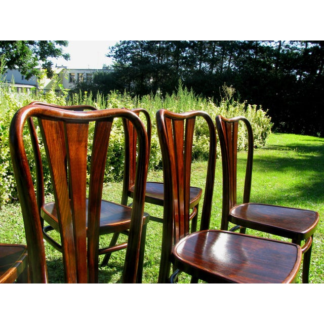 Beech Vintage Dining Chairs by Thonet, 1930s - Set of 6 For Sale - Image 7 of 11