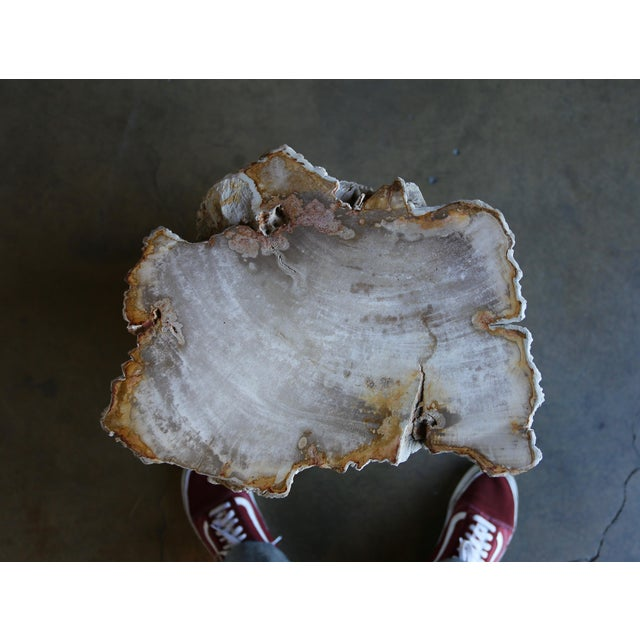 Gray Petrified Wood Side Table For Sale - Image 8 of 12