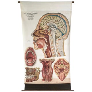 Frohse Anatomical Chart by a.j. Nystrom, Plate No. 7: Head, 1918, Signed For Sale