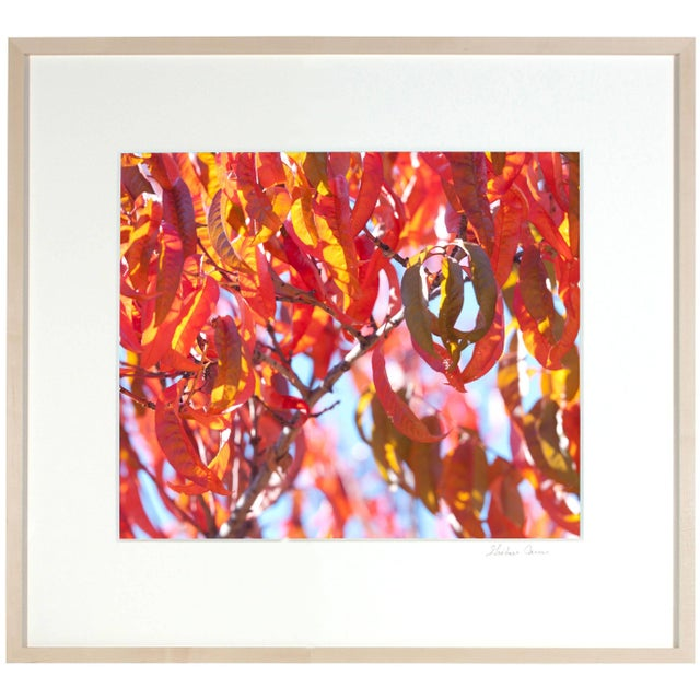 """Please allow at least 14 days for printing and framing before a piece is shipped. Entitled """"Early Charlotte (Peach Tree"""",..."""