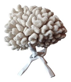 Image of Coral Sculptural Wall Objects