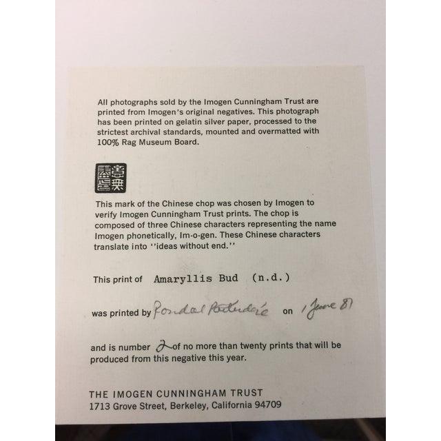 White Imogen Cunningham Estate Photograph Amaryllis Bud For Sale - Image 8 of 9