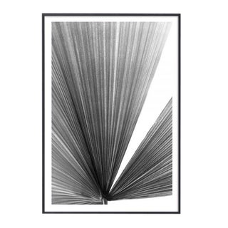 """Palm Frond #3"" Unframed Photographic Print For Sale"