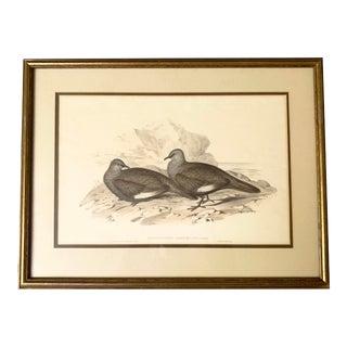 "Antique J. Gould and h.c. Richter ""Petrophassa Albipennis: Gould"" Hand Colored Lithograph Artwork For Sale"