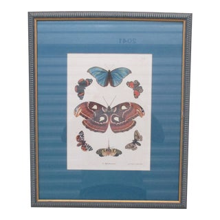 Vintage Print Framed in Wedgewood Blue Color Wood Frame With Glass Cover For Sale