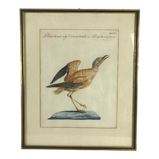 18th Century Courser Bird Print Hand Colored Engraving by Saverio Manetti For Sale