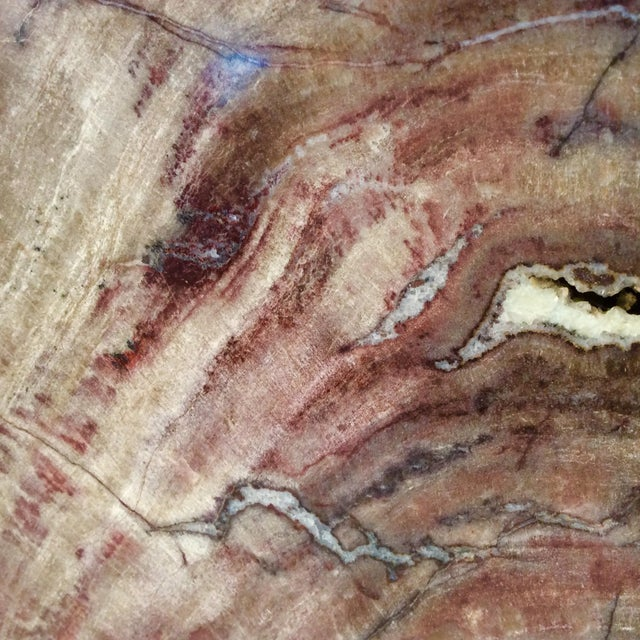Large Petrified Wood Bookends - a Pair - Image 7 of 11
