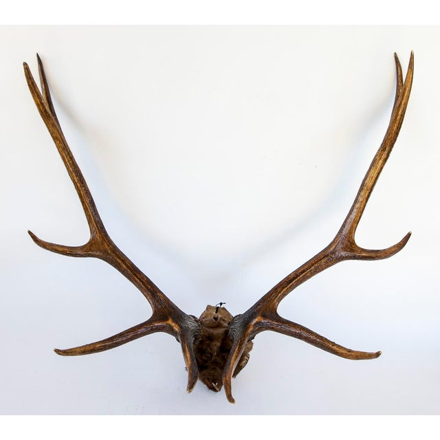 10-Point Elk Antlers - Image 4 of 4
