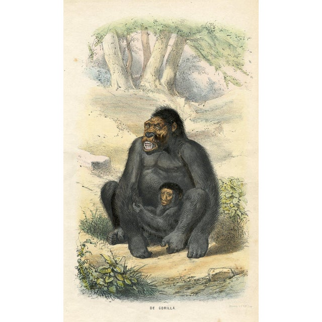 1864 Original Vintage Dutch Gorilla Print For Sale