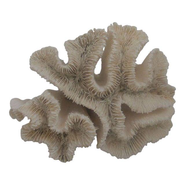 White Coral Specimen - Image 1 of 3