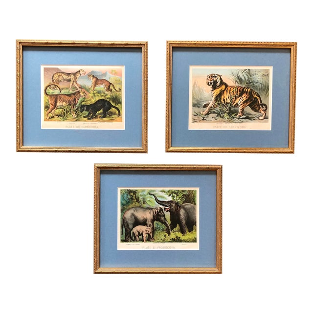Gallery Wall Collection 3 Antique Framed Set of Chromolithographs Prints Jungle Themed (Cats & Elephants) For Sale