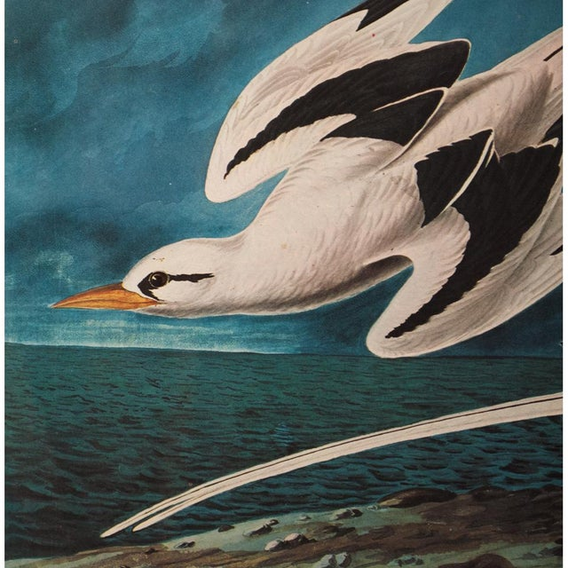 "John James Audubon 1966 ""White-Tailed Tropic Bird"" Lithograph Print by Audubon For Sale - Image 4 of 7"
