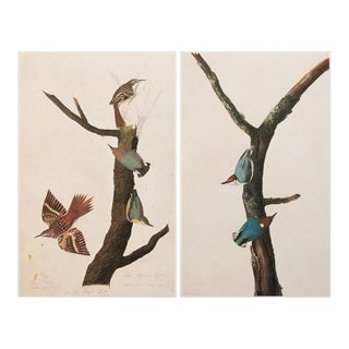 "1960s Cottage ""Birds of America"" Lithograph Prints by John James Audubon - Set of 2"