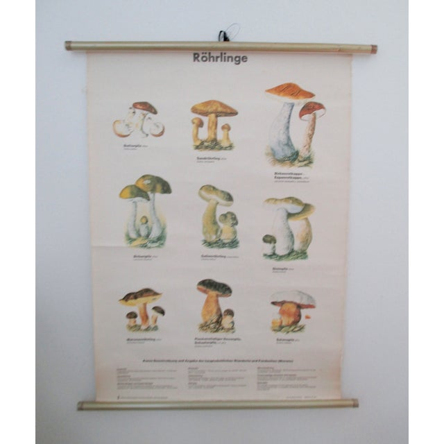 Vintage German School Science Mushrooms Chart - Image 2 of 7