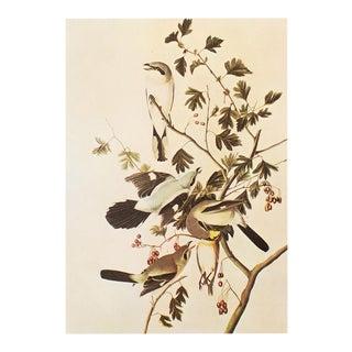 1960s Great Cinereous Shrike and Northern Shrikeby Audubon , Vintage Cottage Print For Sale