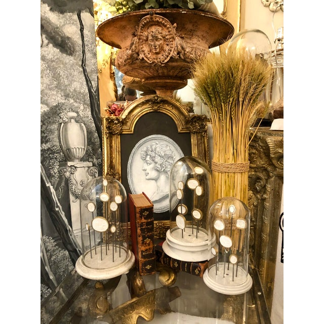 Grand Tour 1900 Italian Glass Dome With 8 Grand Tour Intaglios Composition on Stand For Sale - Image 3 of 13