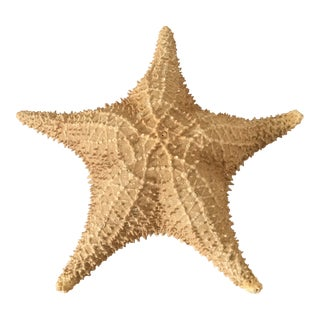 Natural Large Starfish For Sale
