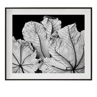 "Original Signed and Numbered ""Cecropia Leaves I"" Contemporary Framed Photograph by Jean Karotkin For Sale"