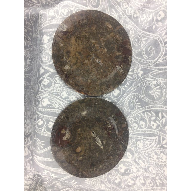 Orthoceras Red Brown Fossil Stone Plates- a Pair For Sale - Image 10 of 12