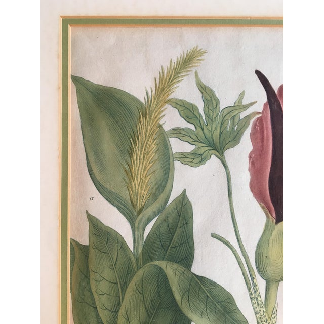 Hand Colored Botanical Print For Sale - Image 4 of 6