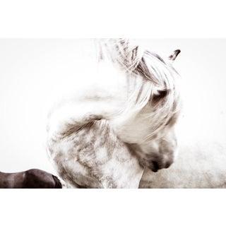 Kimerlee Curyl, 'Wild Wind Study', 2013 For Sale